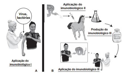Observe as diferentes aplicações dos imunobiológicos