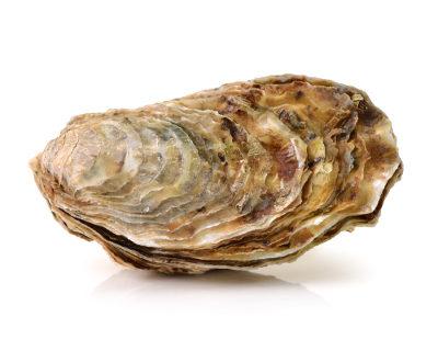 Os bivalves são moluscos que possuem concha formada por duas valvas