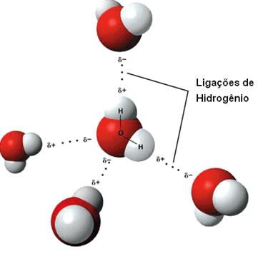 Representação de ligações de hidrogênio entre moléculas de água