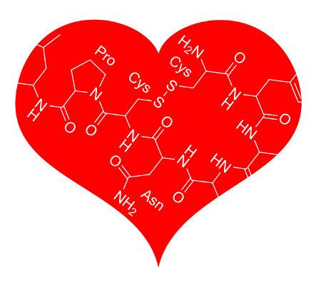 A ocitocina é também chamada de hormônio do amor