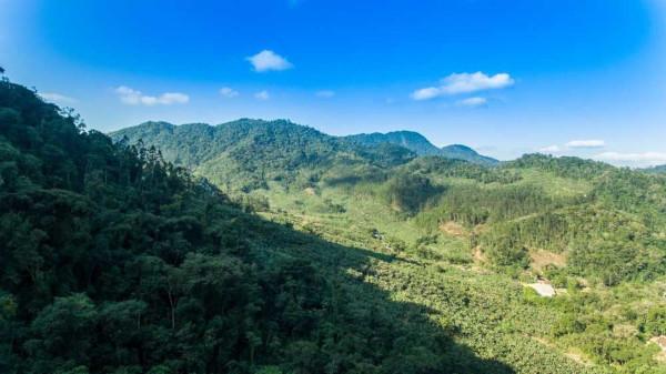 A vegetação da Mata Atlântica é composta por árvores de médio e grande porte, que formam uma floresta contínua.