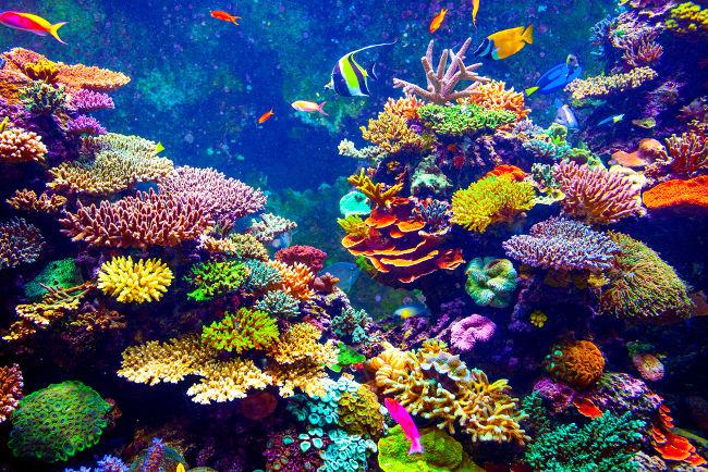 A biodiversidade aquática é campo de estudo da Biologia Marinha.