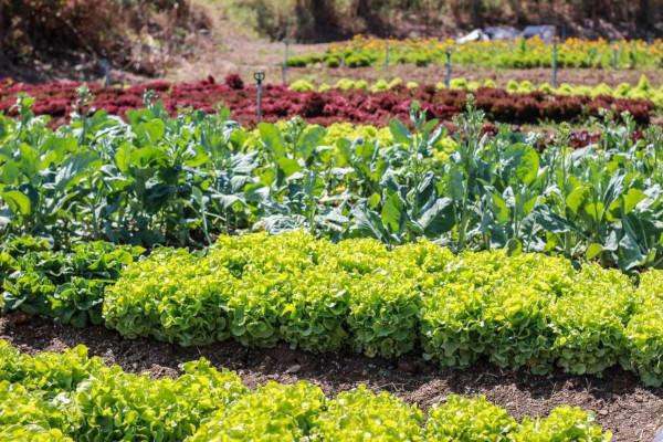 A agricultura familiar realiza em uma pequena propriedade rural diversos cultivos.