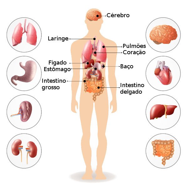 Corpo Humano Partes Do Corpo E Suas Funcoes Brasil Escola