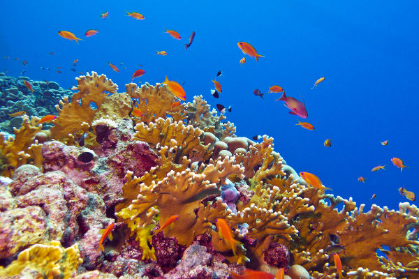 Os recifes de corais são estruturas rígidas formadas por organismos que apresentam esqueleto calcário, tais como os corais.