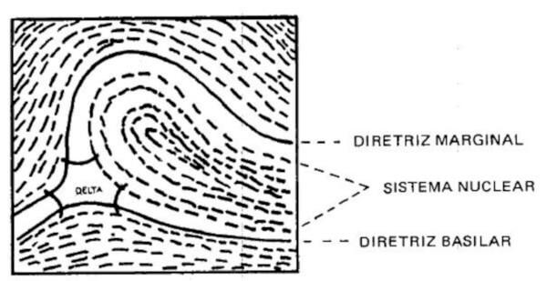 Detalhe de um delta à esquerda do observador