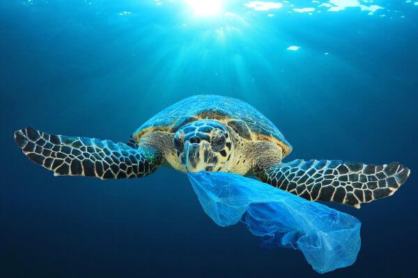 A poluição pode causar danos graves aos animais, contribuindo para o processo de extinção.