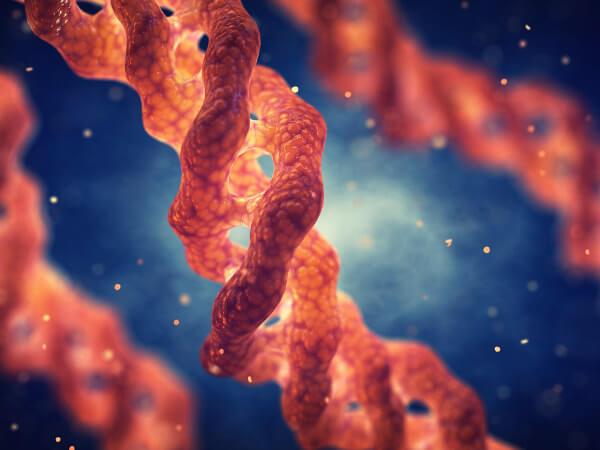 O colágeno é uma proteína que apresenta função de sustentação.