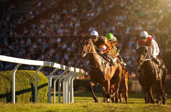 Os cavalos são também usados para atividades esportivas.