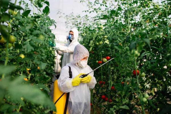 Segundo a Anvisa, muitos alimentos que fazem parte da alimentação brasileira apresentam alta concentração de agrotóxicos.