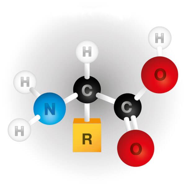O carbono central é denominado de carbono alfa e está ligado a um grupo amino, um grupo carboxila, um átomo de hidrogênio e ao grupo R.