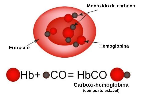 Ao ligar-se à hemoglobina, o monóxido de carbono impede a interação da hemoglobina com o gás oxigênio.