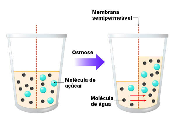 Observe que na osmose, a água segue do meio menos concentrado para o mais concentrado.