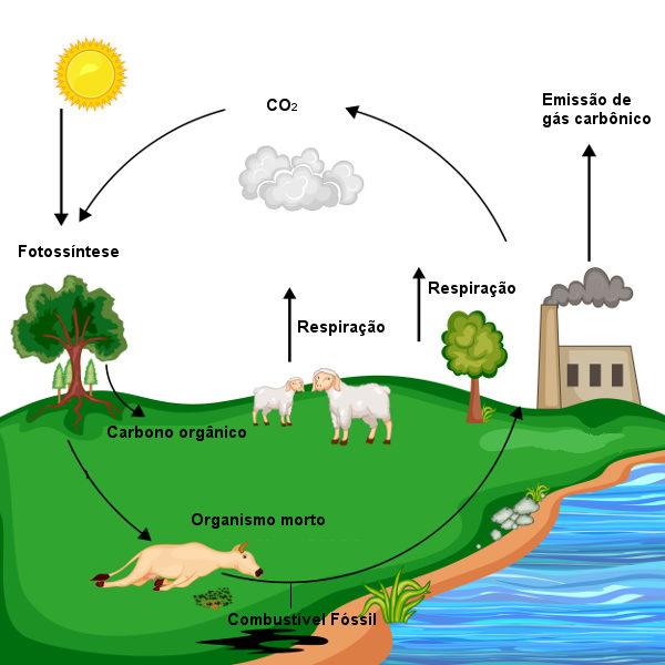 Observe atentamente o esquema resumido do ciclo do carbono.