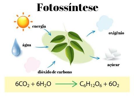 A fotossíntese das plantas é o processo que conduz o carbono de sua forma inorgânica (CO2) para sua forma orgânica (glicose).