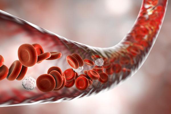 Na Fisiologia, estuda-se como o organismo funciona. A circulação sanguínea é um dos temas abordados nessa área.