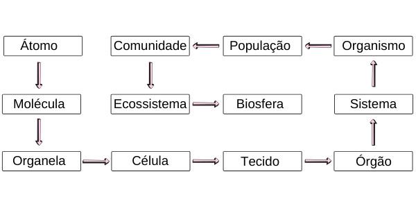 Observe os níveis de organização estudados em biologia.