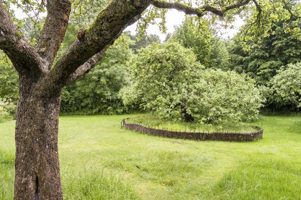 Macieira no quintal de casa onde Newton nasceu. [3]