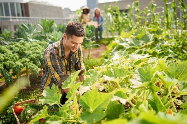 Demanda por alimentos orgânicos impulsiona a Agroecologia